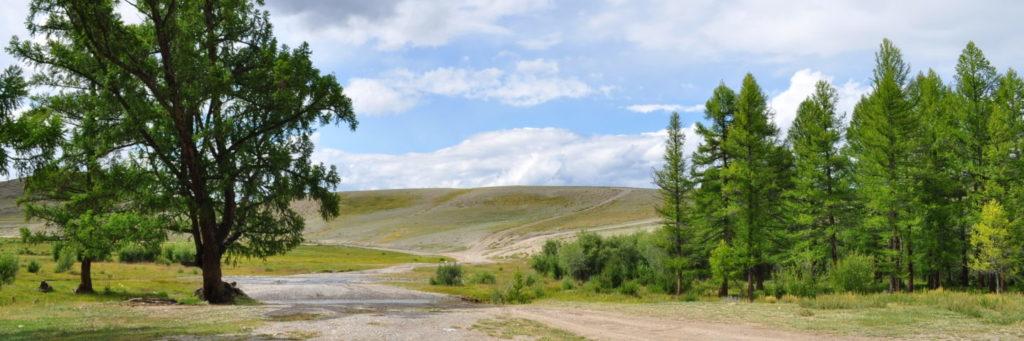 dikaia-priroda-altay-kurayskaia-step