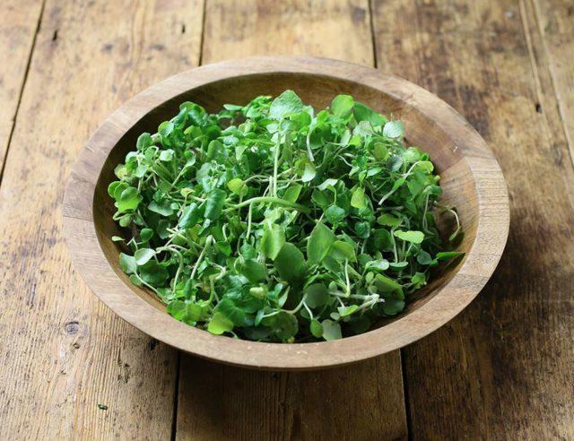 tarelka-s salatom