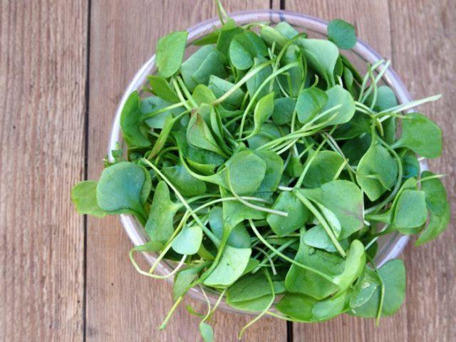 watercress-kress-salat